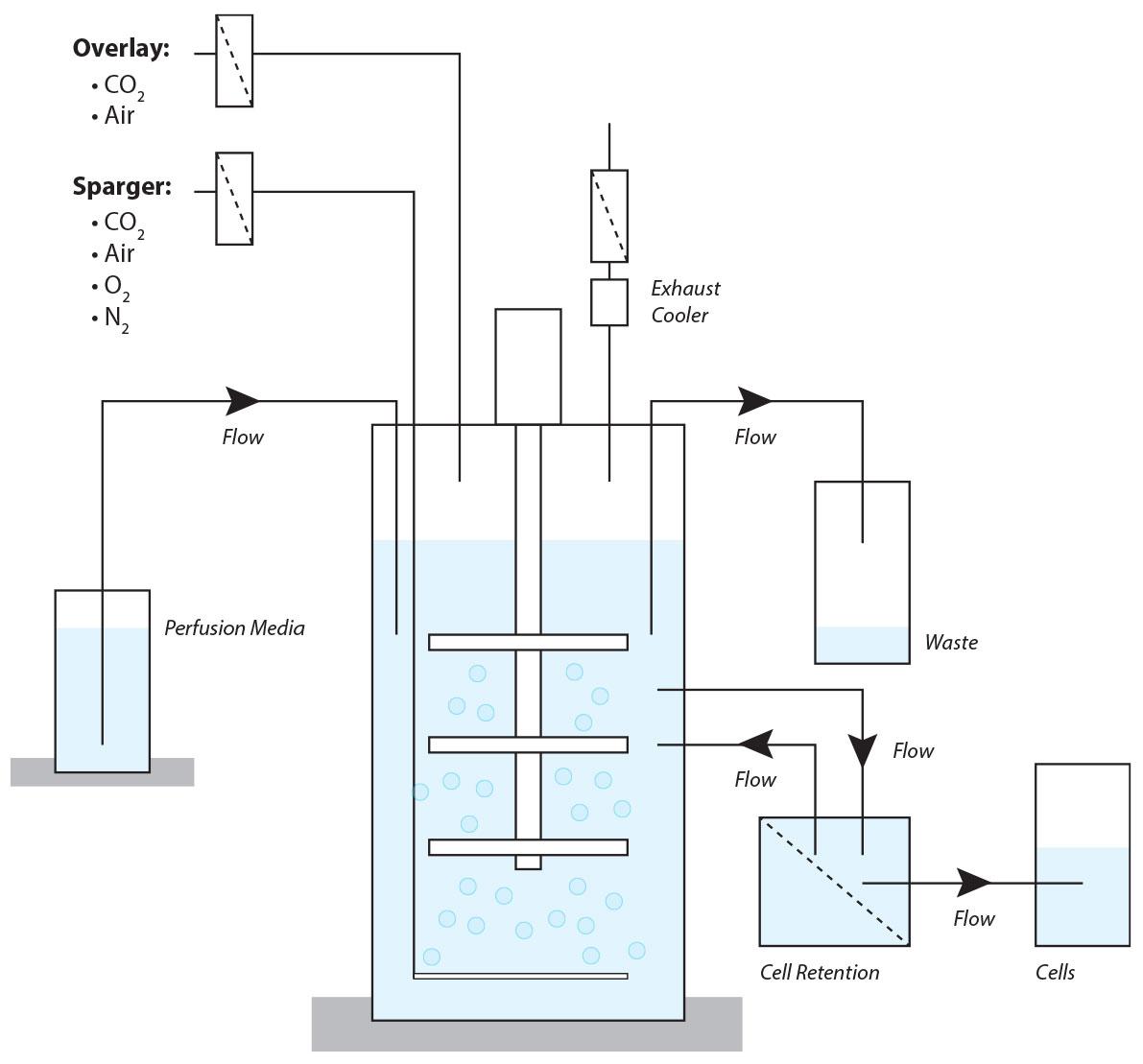 Perfusion Bioreactor Diagram